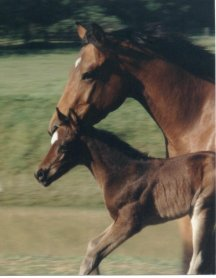 QH filly, Secret Ariat-1 day, Out of Miss Jacinthedocs