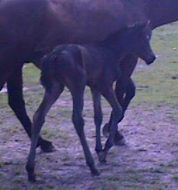 TB filly, Behold the Beauty-1 day