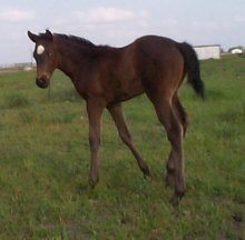 TB filly,Behold the Beauty-3wks