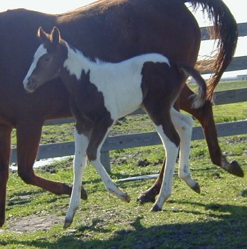 filly- 3 day, out of Thanx Mr Bee