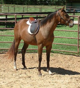 2yo TB filly, Out of Craneet