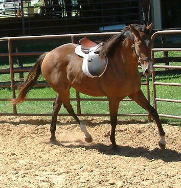 TB filly, Secret Diamondiva