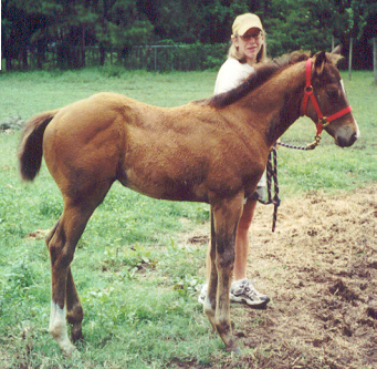 TB filly, Out of Craneet