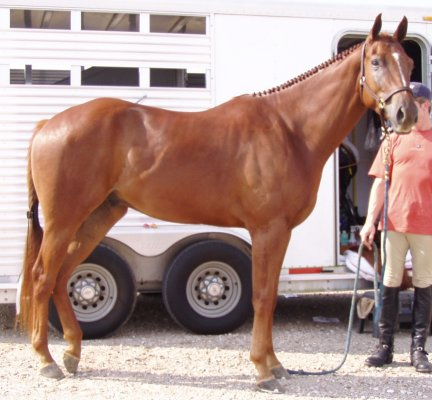 sorrel gelding,-3yo, Out of Surprisetexasgoldy