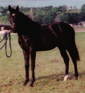 TB filly, Fabulous Secret