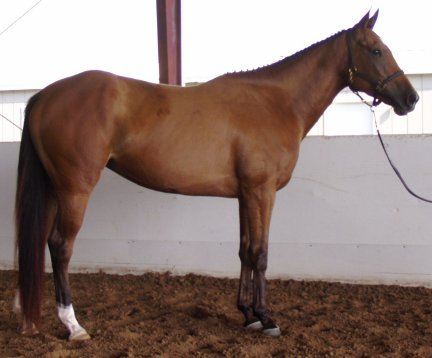 2yo TB filly, Country Crafted