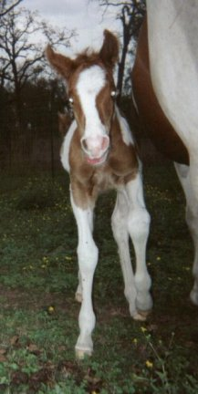Pt Colt, -1 day, Out of Amie Lee