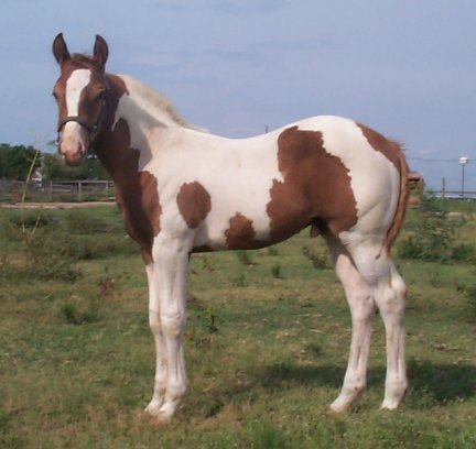 Country Picasso, -2 months, Out of Amie Lee