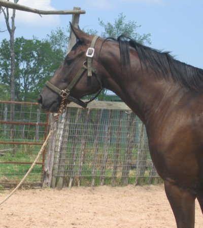 QH colt, 3yo, out of Directors Babe
