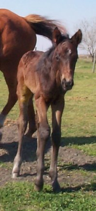 TB colt, -1 day, Out of Lucky Blanket