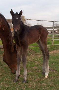 TB colt, 1 day, Out of Top My Sugar