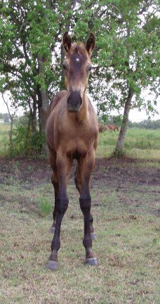 QH colt - out of Johnnie Holland