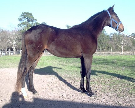 TB Colt, Country Xander, Out of Top My Sugar