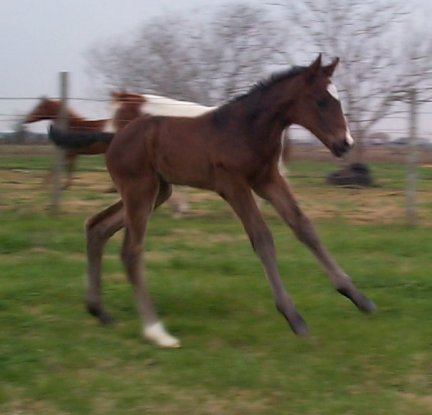 TB colt, -3 days, Out of Top My Sugar