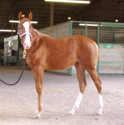 filly, -6 months, out of Monroe As In Marilyn