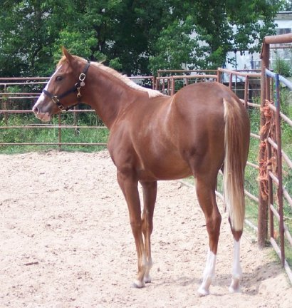 filly, -yearling, out of Monroe As In Marilyn