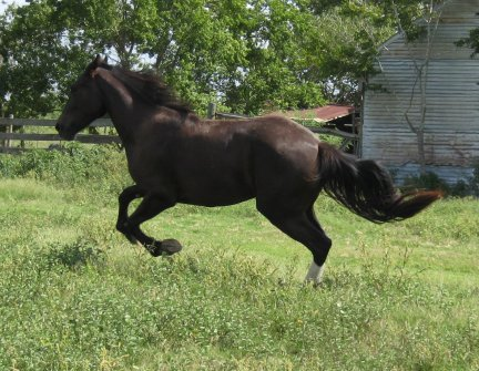 Apollo- 2yo, Out of Shannashawns Lady Willow