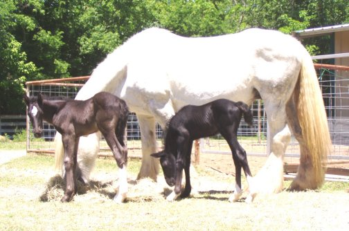Family-1 week old, Out of Shannashawns Lady Willow