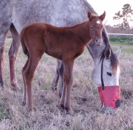 TB filly, -1 day, Out of Frosty Secretary