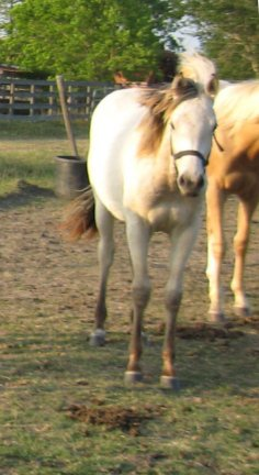 QH filly, - Out of Johnnie Holland