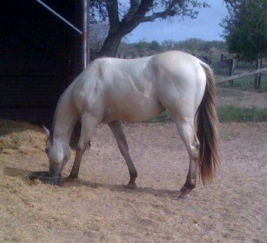 QH filly, -2yo, Out of Johnnie Holland