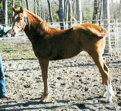 QH colt, Secretariats Country-1 year, Out of Proton Sover