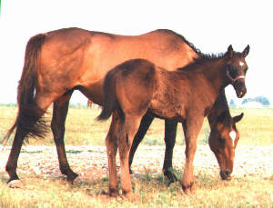 TB Colt, Charbon-9wks, Out of Top My Sugar