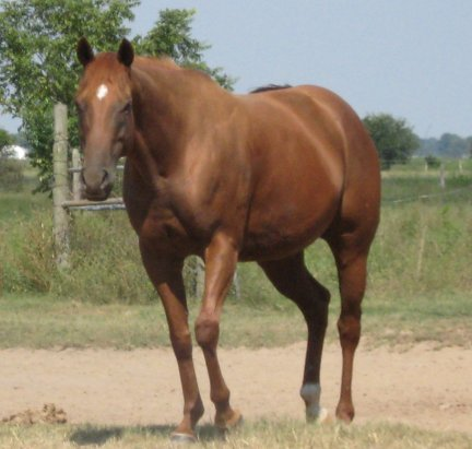 QH mare, 5yo, Out of Rammers Rose